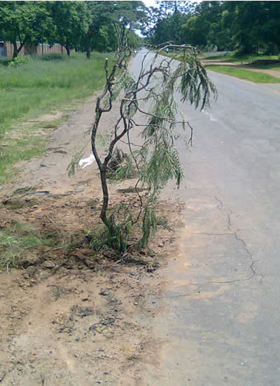 Top 3 Reasons To Plant A Tree In Pothole