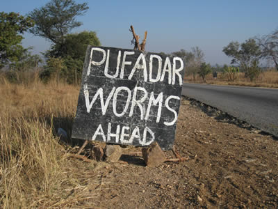 Pufadar worms ahead