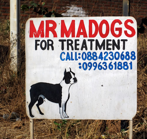 Mr MaDogs
